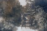 Dingmans Falls, 1907, no. 10