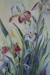 Irises watercolor by Bertha Woodruff