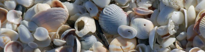 Sanibel Island seashells