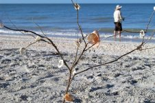 A left-behind seashell ' tree'