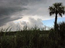 Clouds gather on the Fakahatchee Strand Preserve