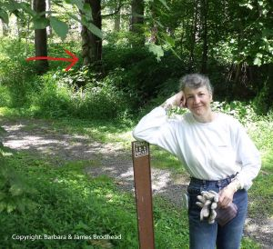 McDade Trail marker; red arrow points to the twisted tree.