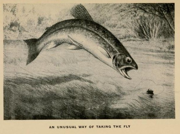 Image from p 46 of The Determined Angler and the Brook Trout by Charles Bradford (NY & London: GP Putnam's Sons, 1916)
