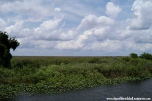 The Everglades along I-75, with a typical south Florida summer sky above