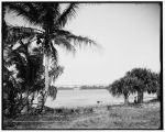 Lake Worth and Royal Poinciana, Palm Beach, Fla. (Library of Congress Prints and Photographs Division Washington, D.C. )