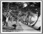 Lake Worth through cocanut [i.e. coconut] trees, Palm Beach, Fla. - between 1905-1915 (Library of Congress Prints and Photographs Division)