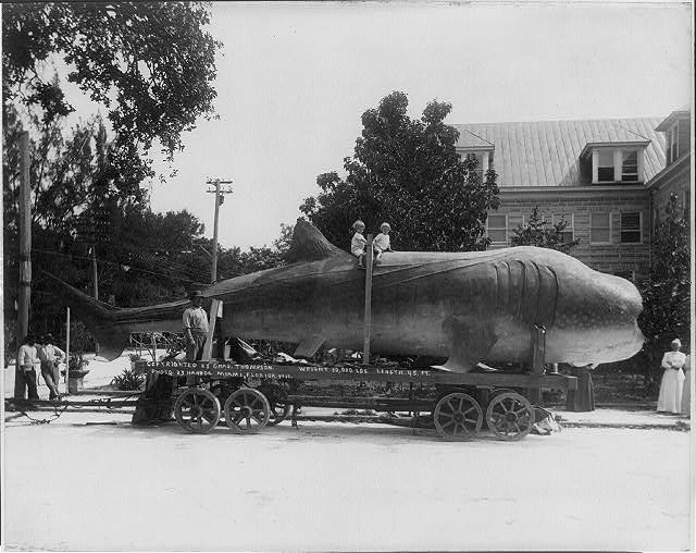 [45 ft long shark (whale?) on trailer; 2 children on its back ( Library of Congress Prints and Photographs Division)