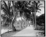 Along the shore of Lake Worth, Palm Beach, Fla (Library of Congress Prints and Photographs Division)