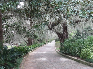 Some of Tallahassee's iconic moss-festooned trees (these were in Maclay Gardens State Park)