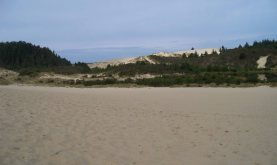 Dunes in the Jessie M. Honeyman State Park, south of Florence, Oregon