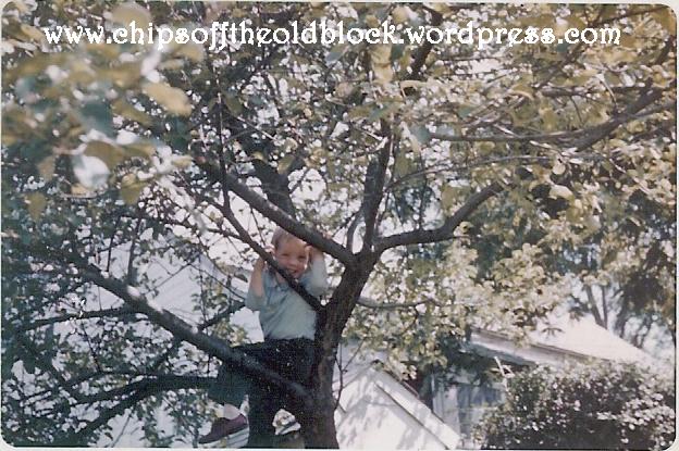 favorite_tree_chips